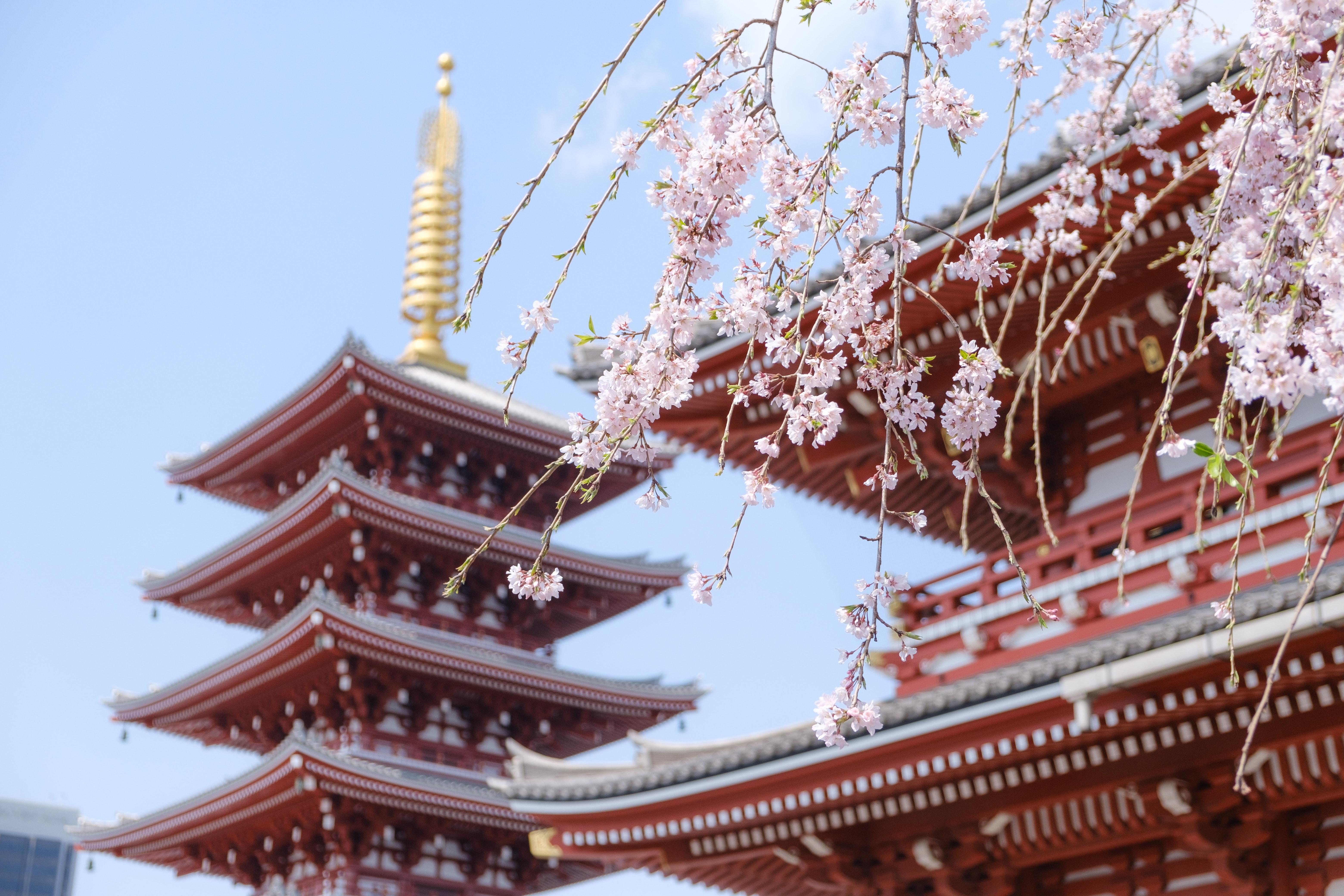竈門神社が鬼滅の刃の聖地として類似点が多いと話題に!かまど絵馬や日輪刀も?